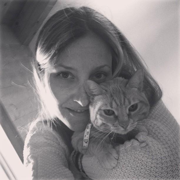 gatos y embarazo