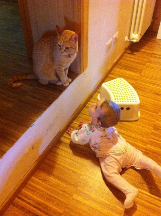bebes y animales