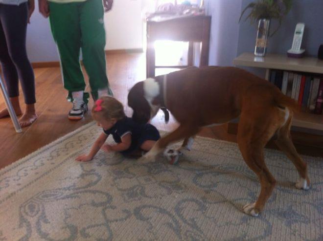 bebes y perros